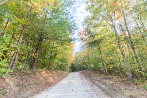 A country road lined with autumn trees in the Red River Gorge At Hemlock Springs.