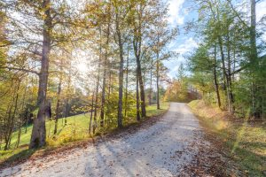 Gravel road in the fall in the Red River Gorge