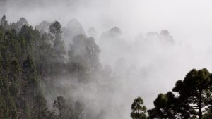 cropped-fog-outlines-pine-trees-40726-1.jpeg