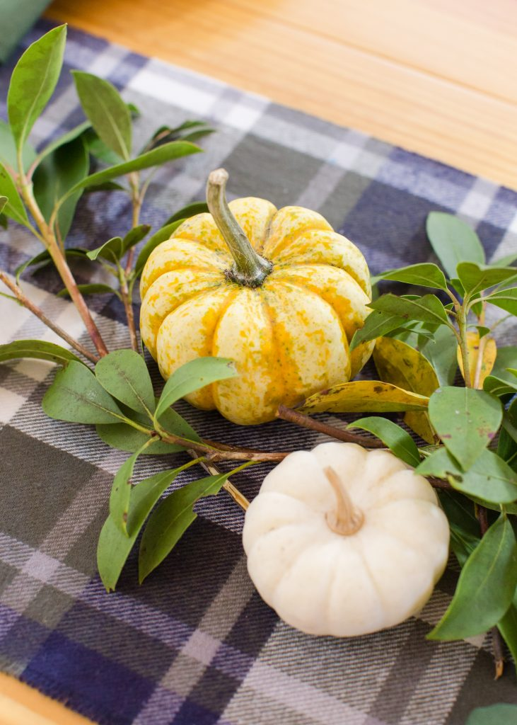 Miniature multi-colored and white pumpkins peek out between mountain laurel boughs on a wood harvest table.